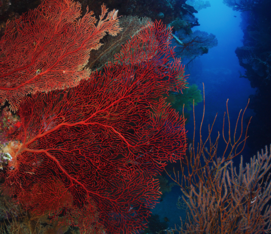 Coral reef New Caledonia